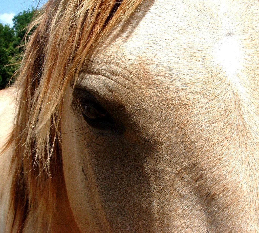 Habitat for Horses - Equine Rescue