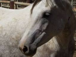 Horse sold to slaughter