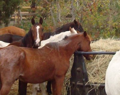 Support Habitat for Horses