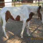 Rescued by Habitat for Horses