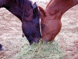 Habitat for Horses Land Fund