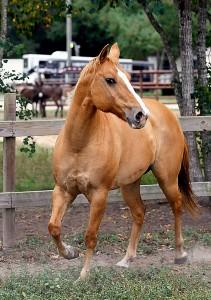 Jesse - a recent arrival at Habitat for Horses