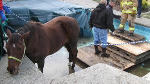 horsepool_12184