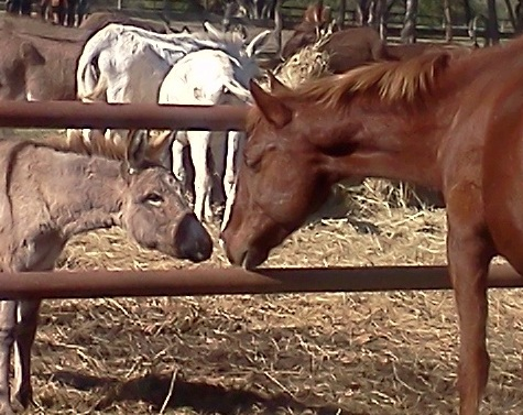 New Stallion