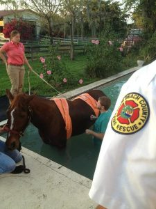 A horse was stuck in a swimming pool in Deer Run, western Palm Beach County, on Dec. 18, 2012 (Palm Beach County Fire Rescue /