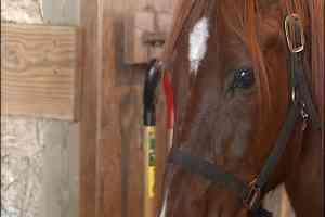 TROUBLE+THE+HORSE+PKG.trans