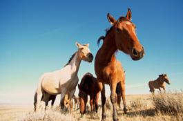 wild-horses_lrg