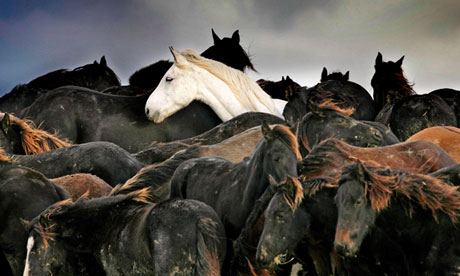 Authorities have been ­concerned for some time about the scale of the trade in horses - transporting horses of low value seems to make no economic sense unless other criminal activity is involved. Photograph: Hoge Noorden/EPA