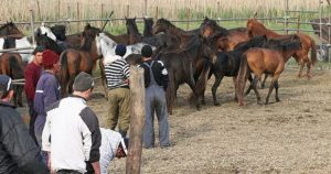 Rounded up ... wild horses captured for slaughter in Romania Read more: http://www.thesun.co.uk/sol/homepage/news/politics/4788596/Minister-Horsemeat-could-be-dangerous.html#ixzz2Kbi26dq6