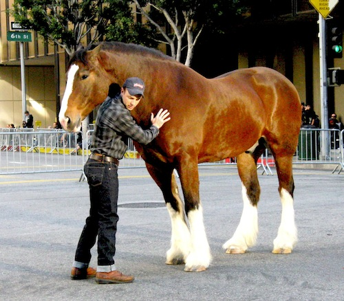 budweiser clydesdale with actor barefoot x500px
