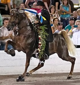 The big lick gait of the Walking horse has inspired trainers to do many things to exaggerate the horses' natural movements. (Randall Saxton photo)