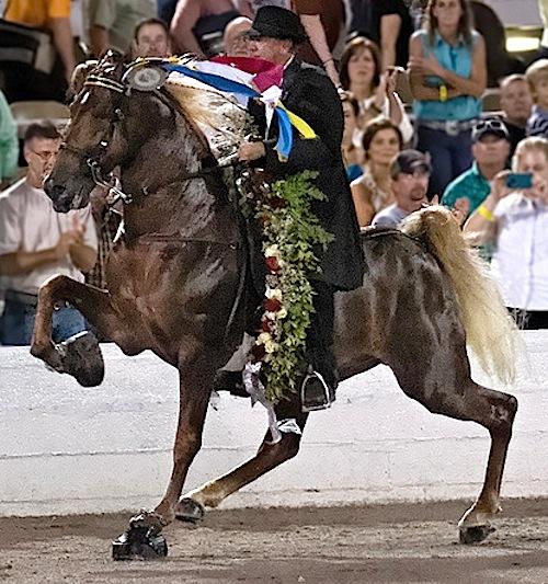 FLK-cc-randallsaxton-walking-horse-celebration-2012-walk-time-charlie-7981668164_491dac1edd_c