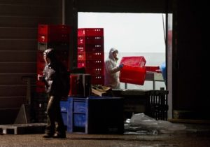 Employees at Willy Selten Meat Wholesale in Oss, Netherlands, work on Feb. 15 after Dutch officials raided the factory believed to be mixing horse and beef and selling it as pure beef. On Wednesday, the Dutch government ordered it and another company to withdraw 55,000 tons of meat from the market.