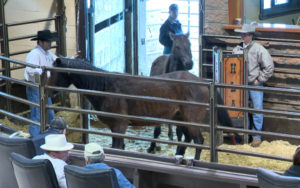 Horses are sold at a livestock auction in High River, Alberta. Global News