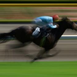 horse racing tpower1978 grand national animal cruelty