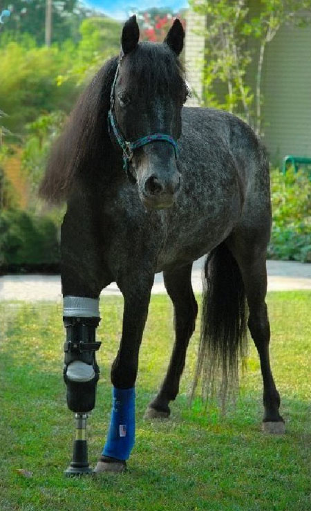 horse_with_false_leg