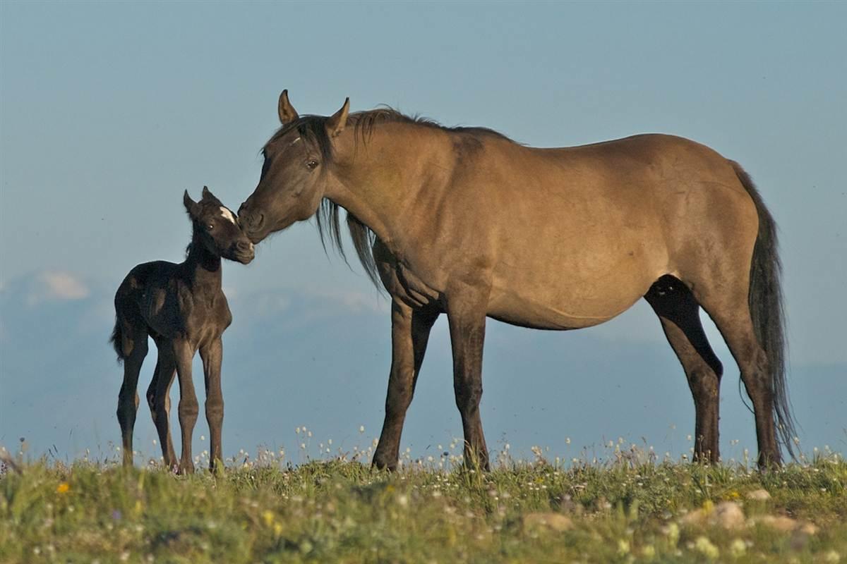 ss-130403-wild-horses-01.ss_full