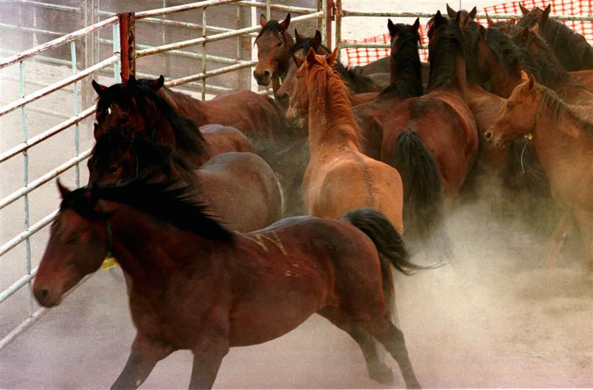 ss-130403-wild-horses-17.ss_full