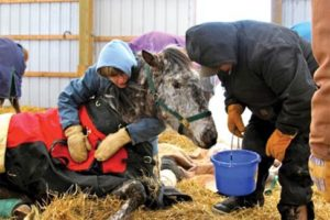 Sweetie Pie, pictured in the photo at left, was one of the horses that did not make it.