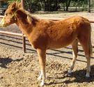 Dax - adoptable horse