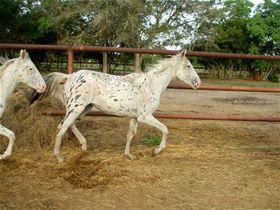 Ember_11-139_rightside_10-18-2011