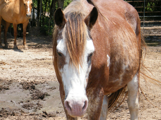 Billy - Adoptable Horse