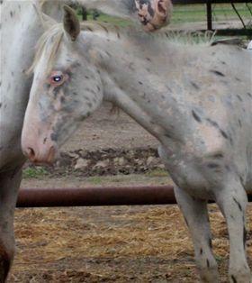 Genevieve - Adoptable Horse