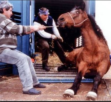 stop horse slaughter