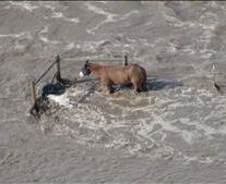 Colorado floods - a good story of a horse rescued.