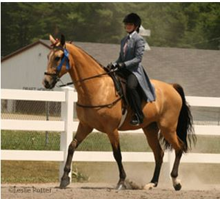 national walking horse competition