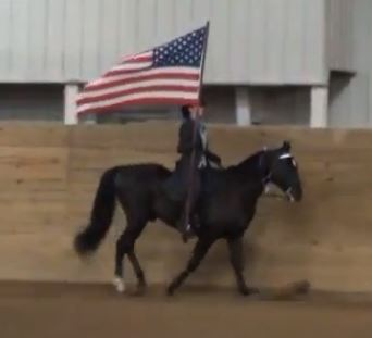 Tennessee walking horse competition