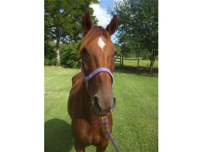 Bridgette - Adoptable Horse