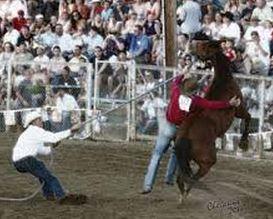 wild horse roping