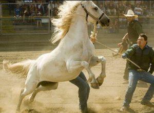 wild horse riding event