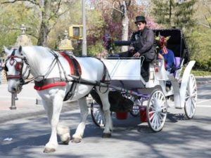 NYC Carriage Ride