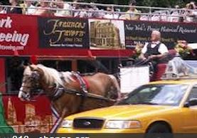 Horse carriage new york