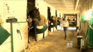 Horses at Golden Gate Fields (CBS)