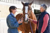 Horse health article