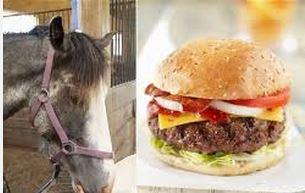 horsemeatscandal