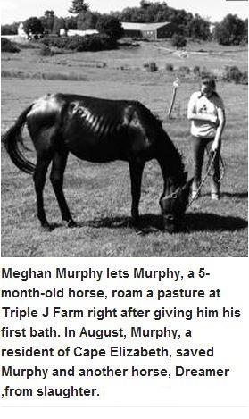 Meghan Murphy saves 2 horses