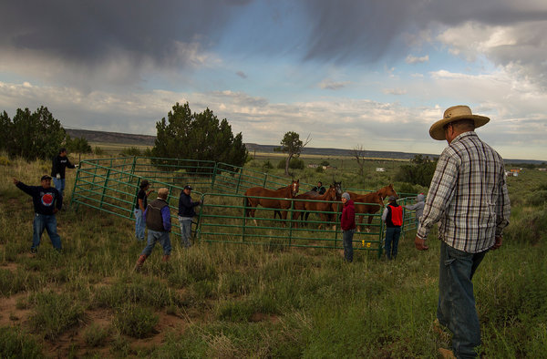 Diego James Robles for The New York Times A feral horse roundup in August in Manuelito, N.M. The Navajo Nation hired the wranglers.