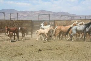 Palomino Valley Center horses