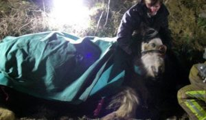 Horse rescue off cliff
