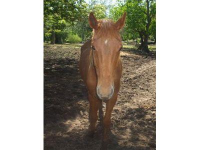 Solea - Adoptable Horse