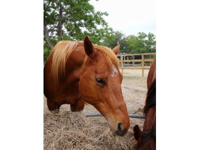 Sweets - adoptable horse