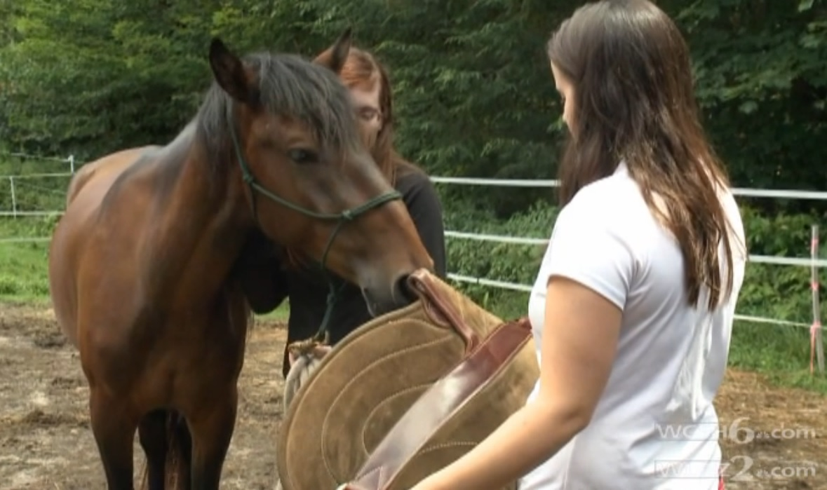 Horse assisted therapy