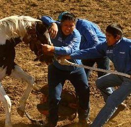 Heemsah Memorial Wild Horse Race