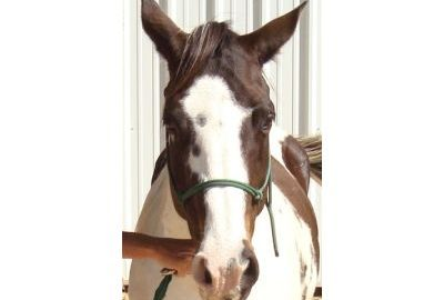 Carolina Jewel