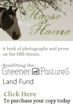 horse at home book