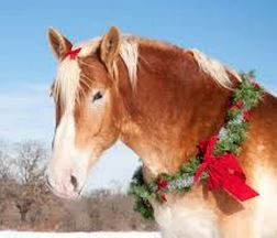 Christmas Horse Pictures.Give A Horse A Home For Christmas Habitat For Horses